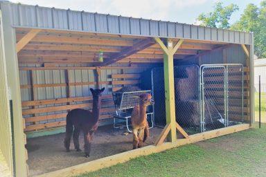 llama shed